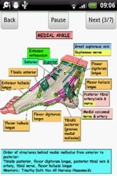 download Anatomy of the Ankle Joint apk