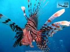 download Scuba Diving Holidays