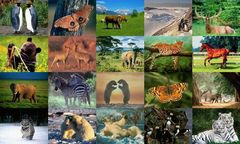 download Animals Photo Screensaver Volume 1