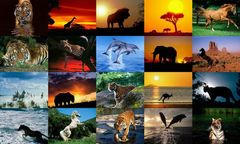 download Animals Photo Screensaver Volume 5